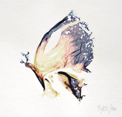 farfalla lift off polaroid sx70 rebecca lena